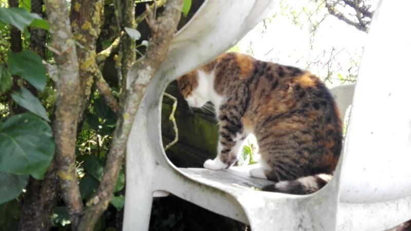DUCHESSE - chatte femelle, née 2011/2012, borgne - (PASCANI) - adoptée par Chantal Pascal (dpt 63) - Page 5 124_el10