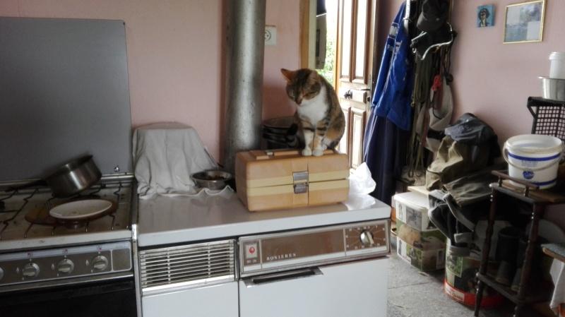 DUCHESSE - chatte femelle, née 2011/2012, borgne - (PASCANI) - adoptée par Chantal Pascal (dpt 63) - Page 5 125_j_10