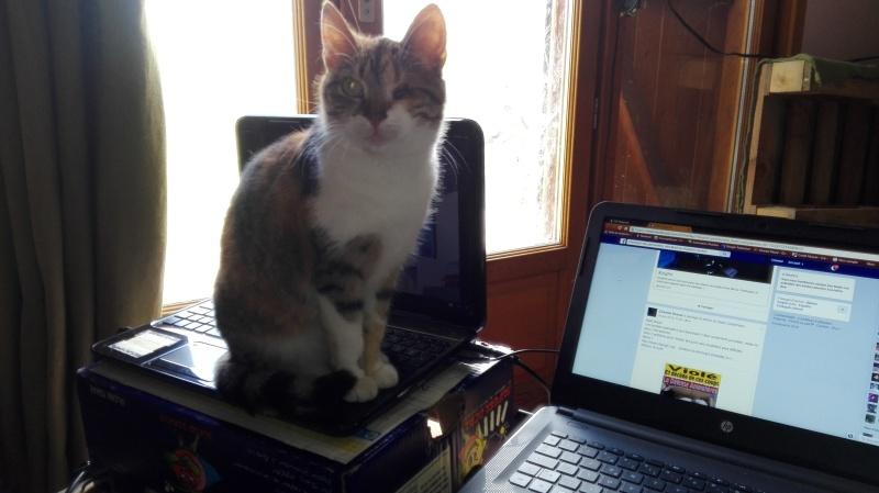 DUCHESSE - chatte femelle, née 2011/2012, borgne - (PASCANI) - adoptée par Chantal Pascal (dpt 63) - Page 5 127_be10