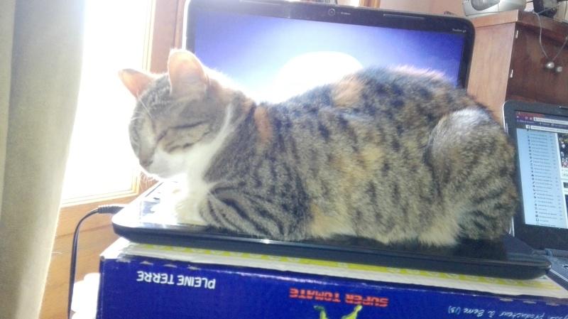 DUCHESSE - chatte femelle, née 2011/2012, borgne - (PASCANI) - adoptée par Chantal Pascal (dpt 63) - Page 5 128_bo10