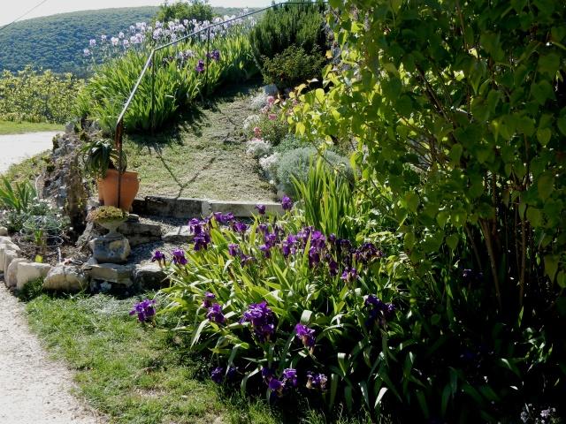 Et les herbes dans vos champs d'iris ? Dscn2310