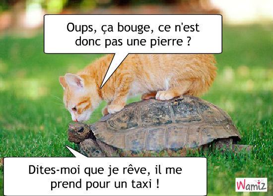 Les chats - Page 6 A_0210