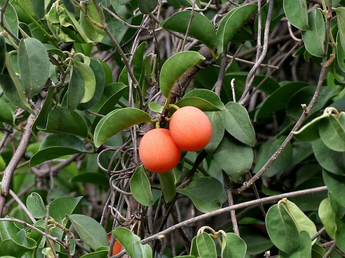 Fleurs,....fruit,.....tout ce qui se mange,...se boit....ou qui vient de la nature.......... - Page 20 A_xime10