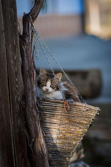 Les chats - Page 6 Cha_r10