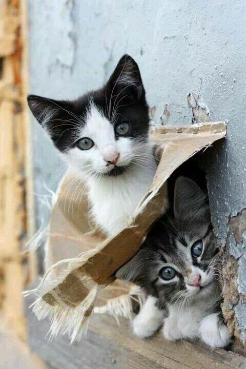 Les chats - Page 6 Cha_z10