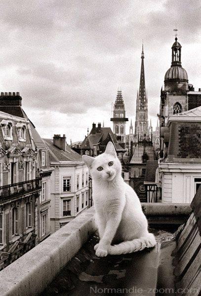 Les chats - Page 12 Cha_z19