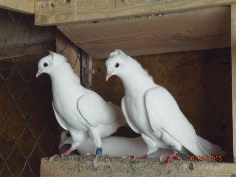 Бакинские голуби - Страница 3 P6300911