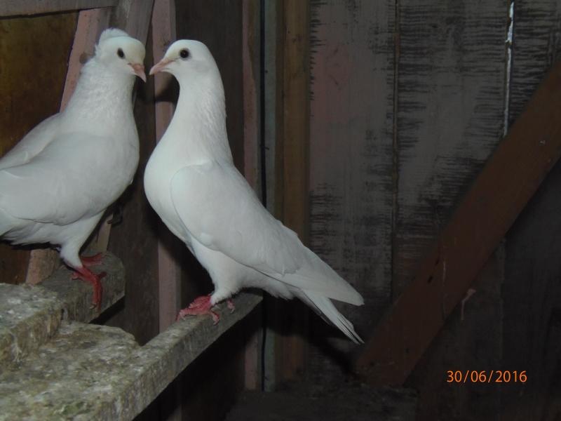 Бакинские голуби - Страница 3 P6300912