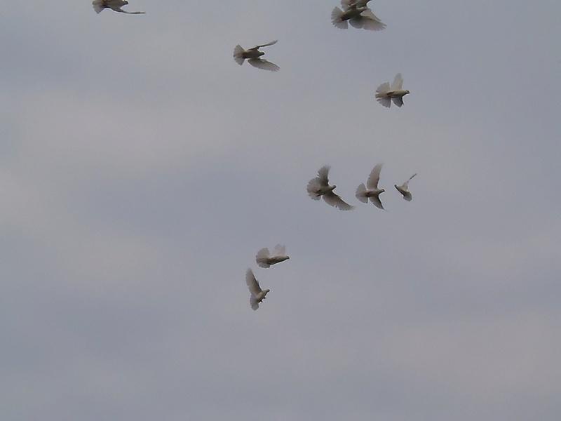 Бакинские голуби - Страница 3 P7190410