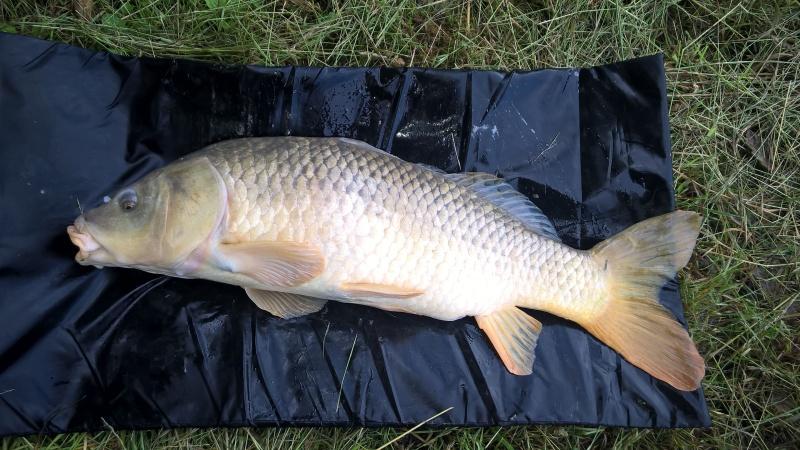 Vos plus jolis poissons (en dehors du poids) Wp_20111