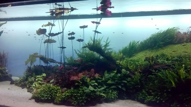 visite à l'Oceanarium de Lisbonne Wp_20114