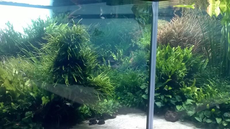 visite à l'Oceanarium de Lisbonne Wp_20115