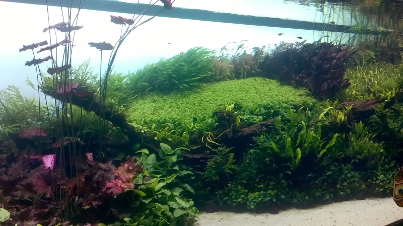 visite à l'Oceanarium de Lisbonne Wp_20116