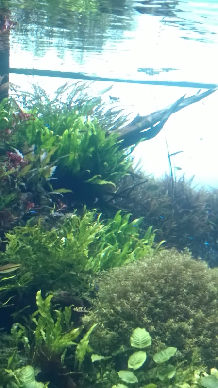 visite à l'Oceanarium de Lisbonne Wp_20120