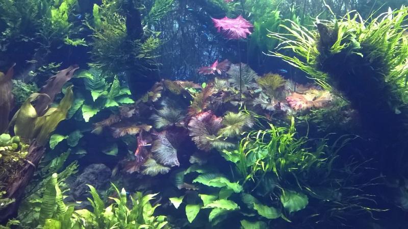 visite à l'Oceanarium de Lisbonne Wp_20121
