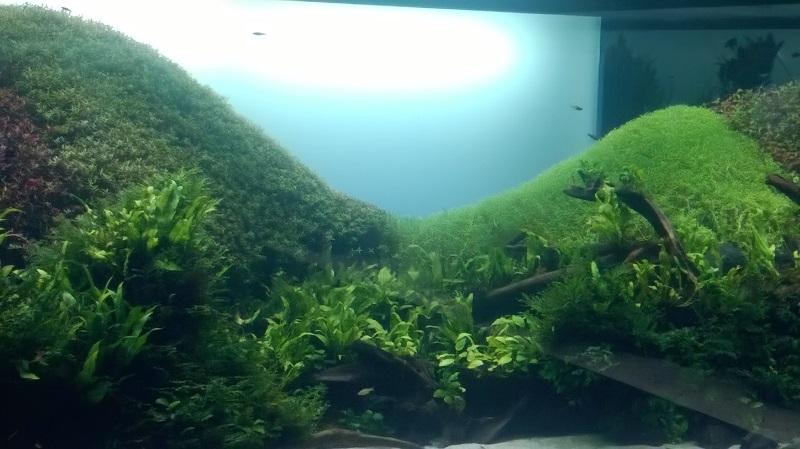 visite à l'Oceanarium de Lisbonne Wp_20122