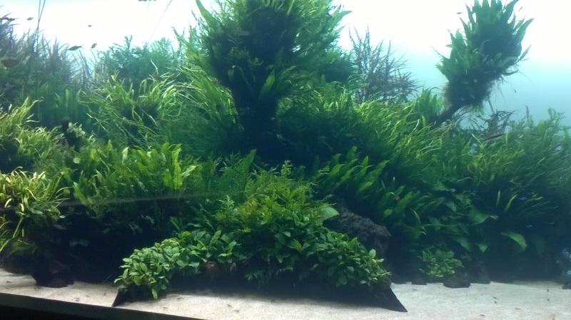 visite à l'Oceanarium de Lisbonne Wp_20123