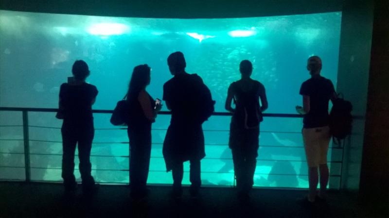 visite à l'Oceanarium de Lisbonne Wp_20124
