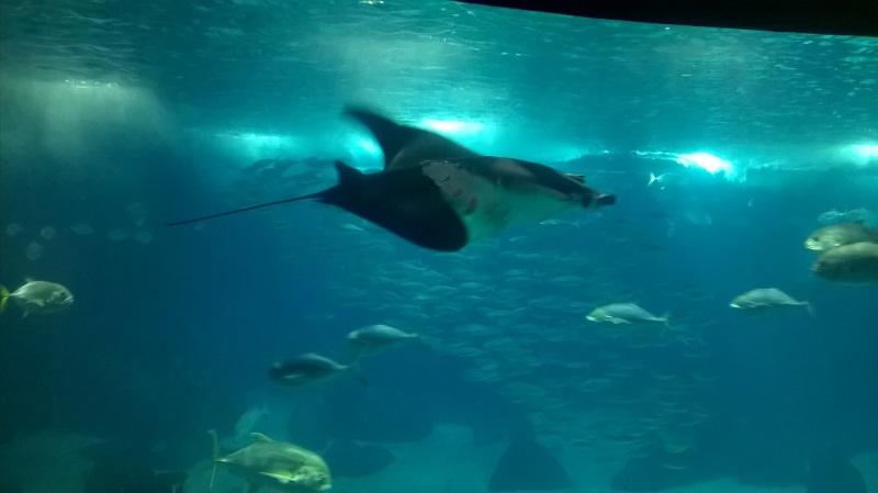 visite à l'Oceanarium de Lisbonne Wp_20125