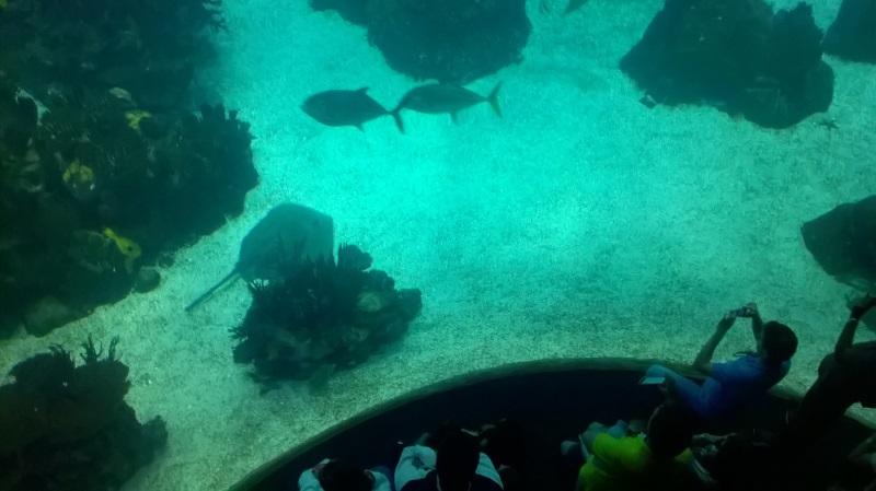 visite à l'Oceanarium de Lisbonne Wp_20126