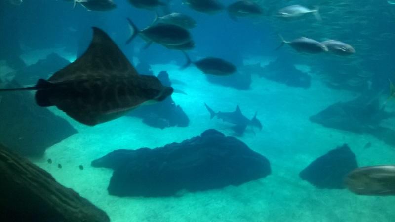 visite à l'Oceanarium de Lisbonne Wp_20127