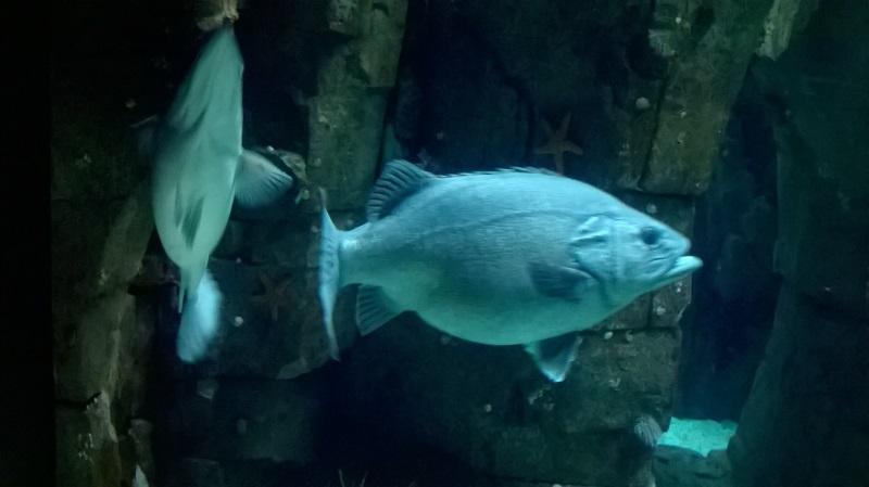 visite à l'Oceanarium de Lisbonne Wp_20128