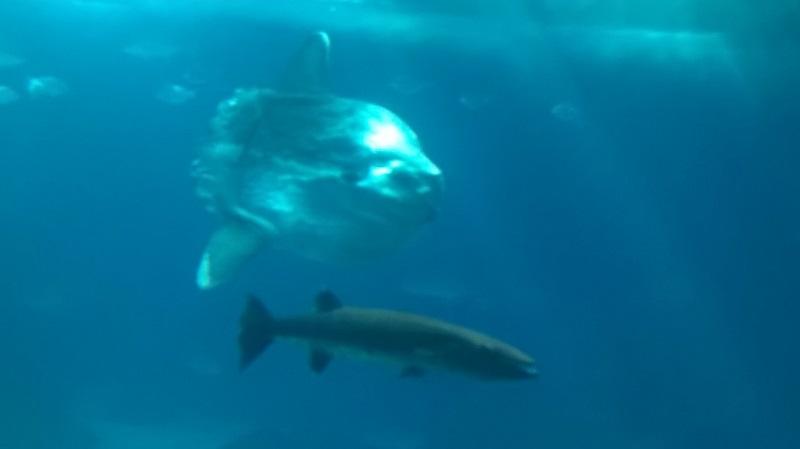 visite à l'Oceanarium de Lisbonne Wp_20129