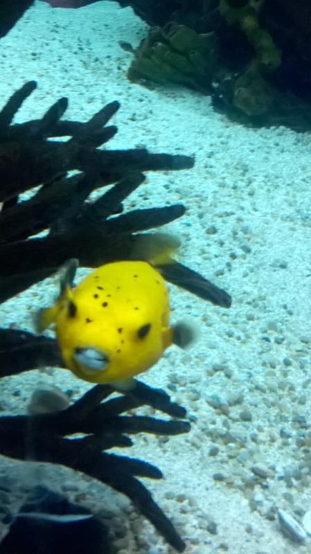 visite à l'Oceanarium de Lisbonne Wp_20130