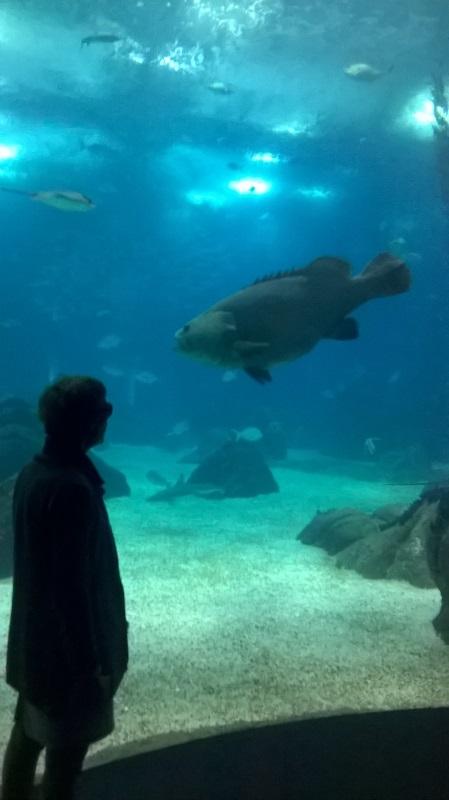 visite à l'Oceanarium de Lisbonne Wp_20131