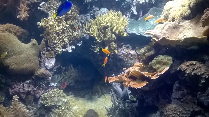visite à l'Oceanarium de Lisbonne Wp_20159