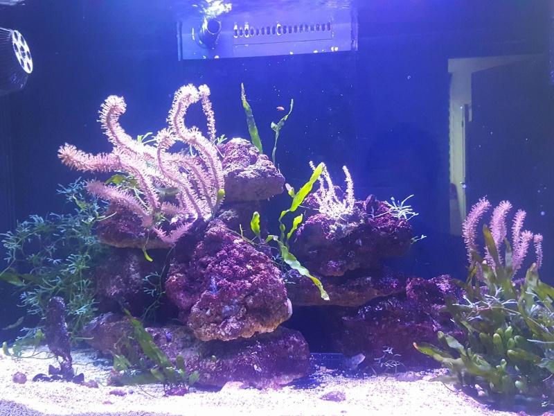 Red sea reefer Hippocampes 13575711