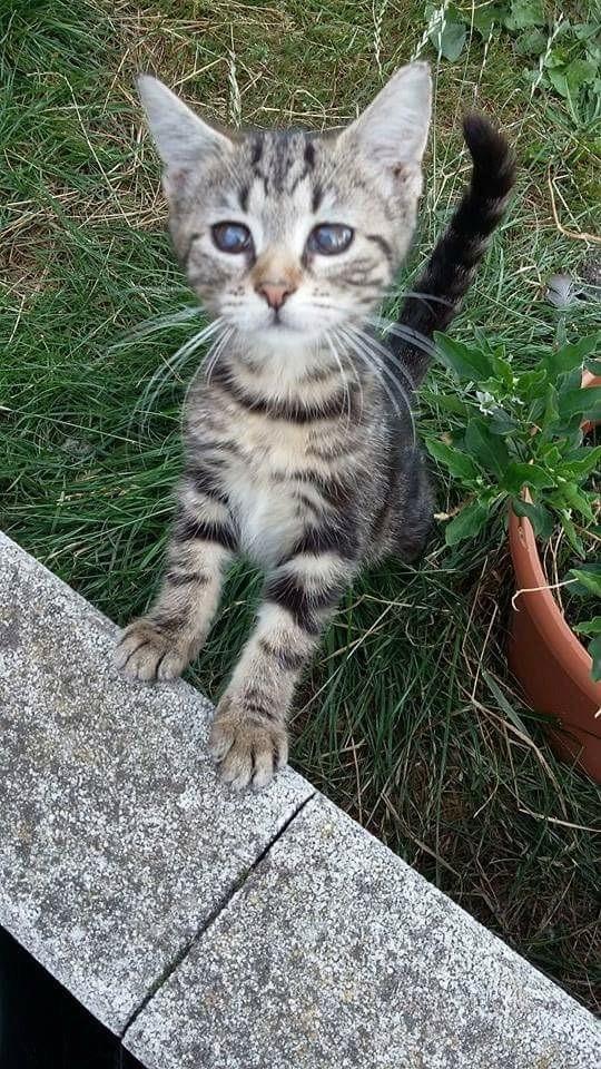 Féline, adorable tigrée Image107