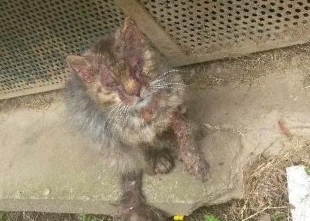 Gabin, un chat qui revient de loin Image27