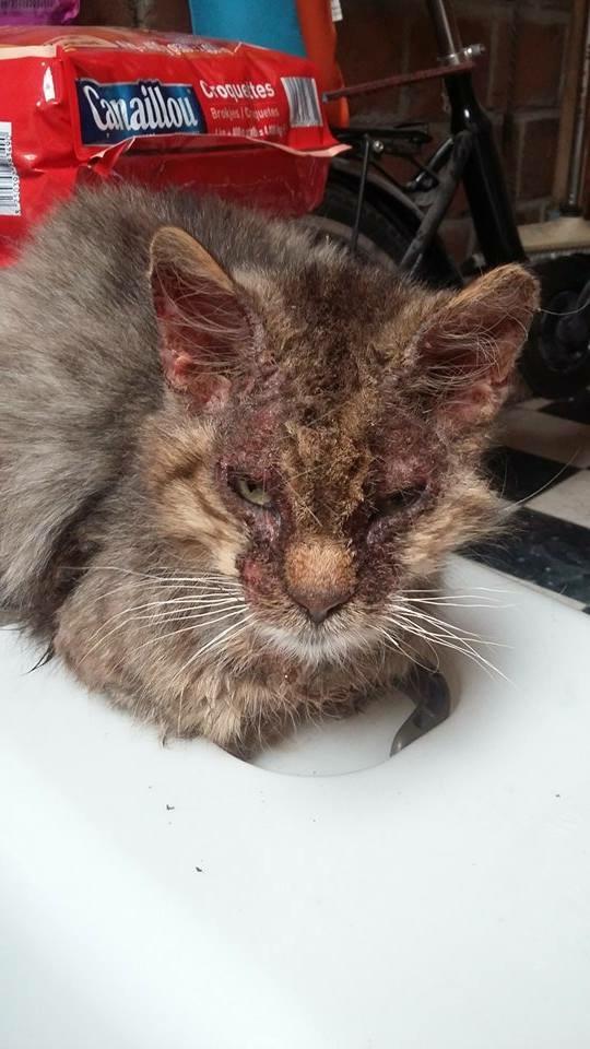 Gabin, un chat qui revient de loin Image28