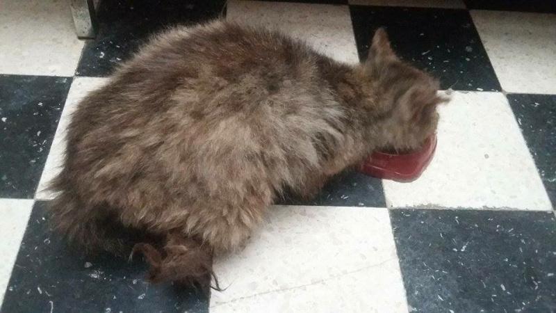 Gabin, un chat qui revient de loin Image30