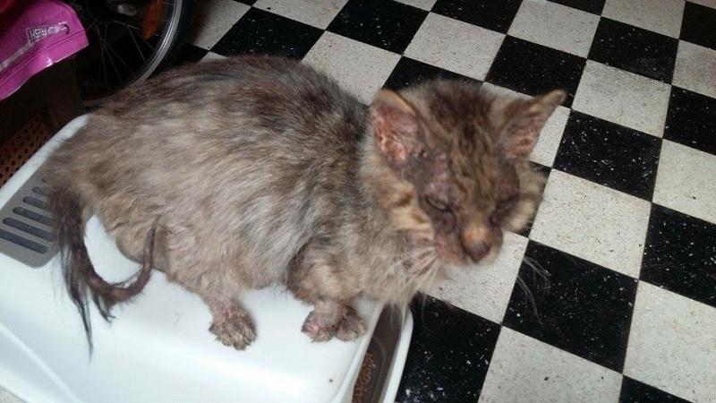 Gabin, un chat qui revient de loin Image37