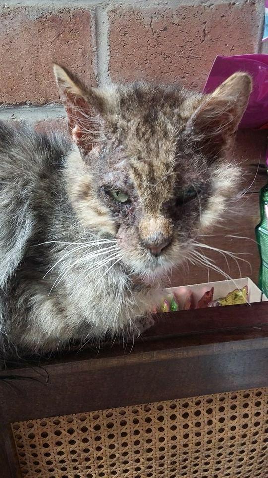 Gabin, un chat qui revient de loin Image38