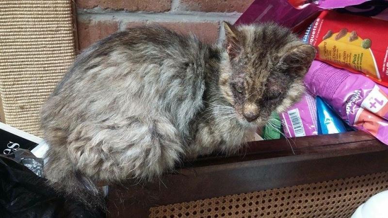 Gabin, un chat qui revient de loin Image39