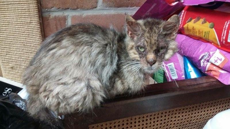 Gabin, un chat qui revient de loin Image40