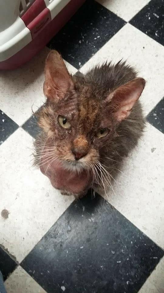 Gabin, un chat qui revient de loin Image67
