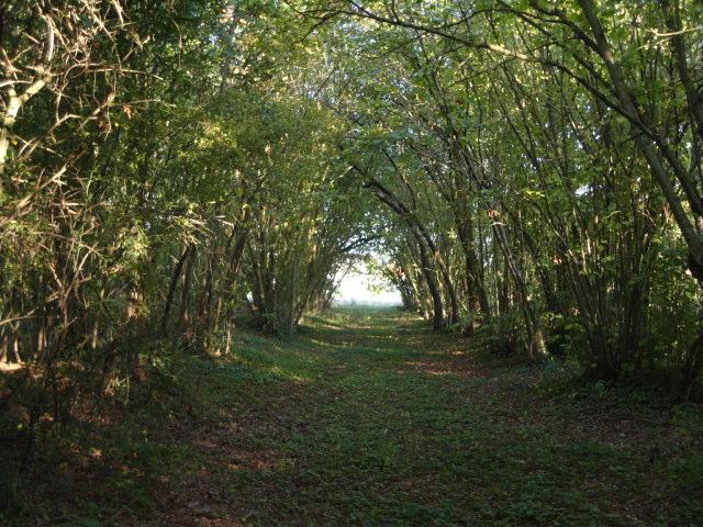 Chemin sous les bois Dsc01717