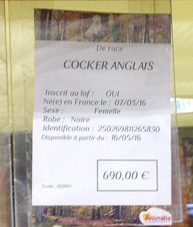 Relevés des prix des chiots en animalerie. - Page 3 Cocker14