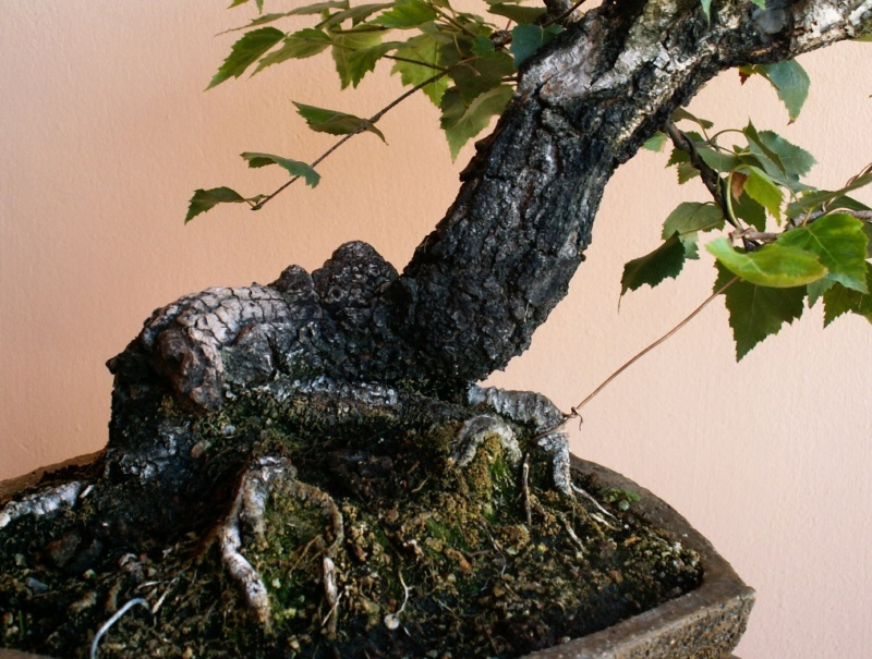 Slanting birch 02910