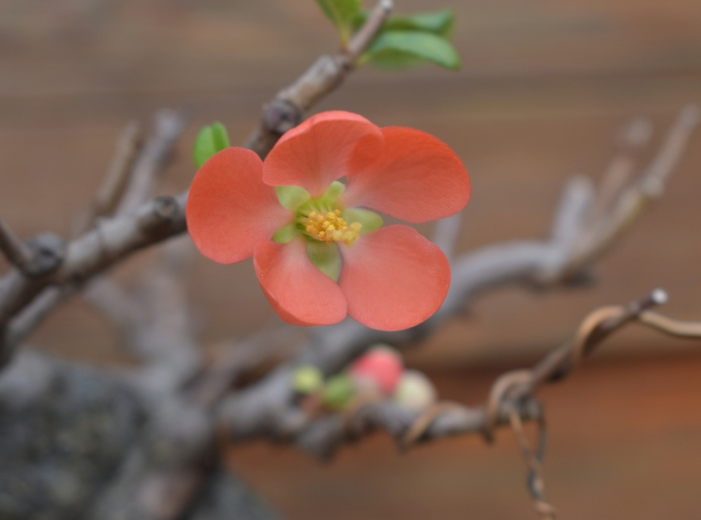 A few blossoms_sharing my joy Flower12
