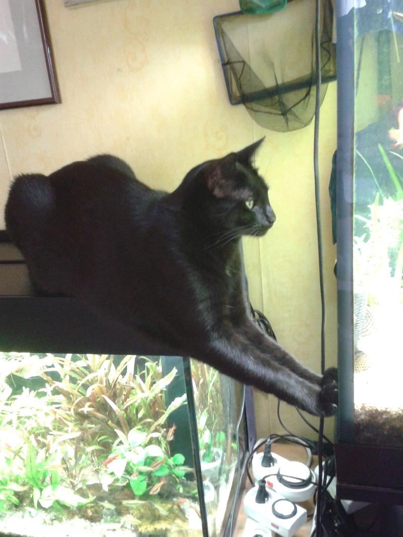 les chats de la meduse 2014-010