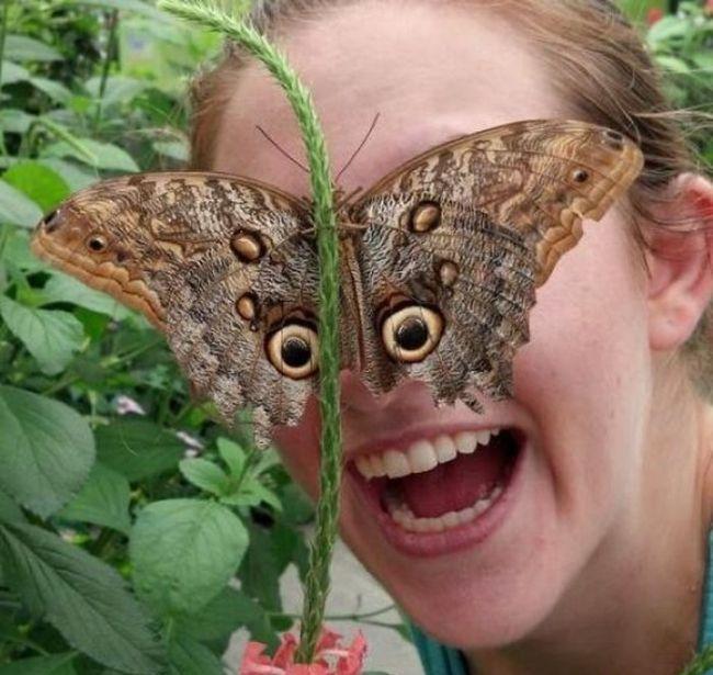 papillons de nuit  Butter10