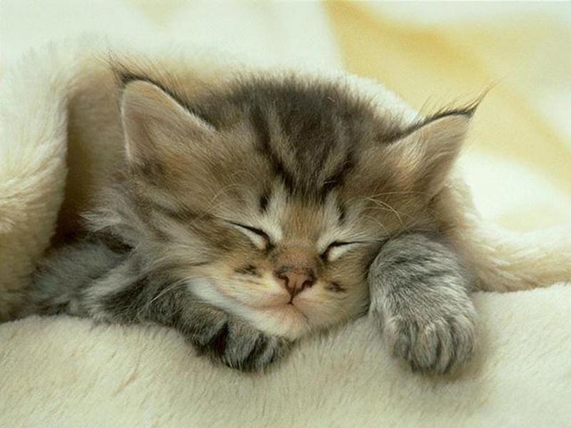 le post qui detend ... - Page 20 Kitten10