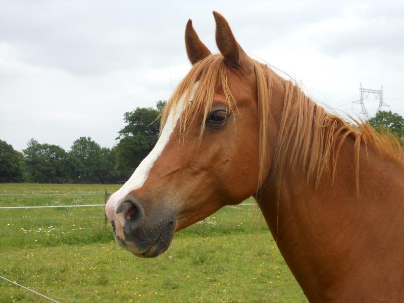Heldon, PSAR ataxique, un cheval que l'on vouvoie Heldon10