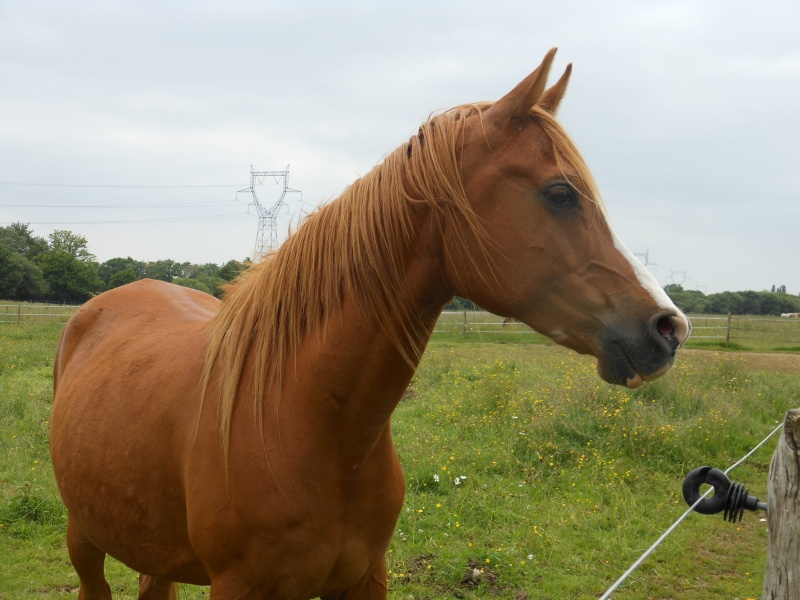 Heldon, PSAR ataxique, un cheval que l'on vouvoie Heldon12
