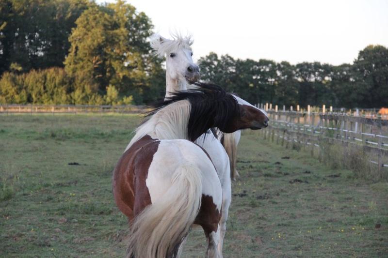 Machu, ancien poney de club Machu_12